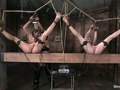 Two girls in the stocks get toyed and wired by a girl