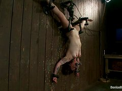 Vivienne Del Rio Tattooed Submissive Gril Bounded Upside Down