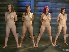 A few girls get their pussy toyed while being tied up