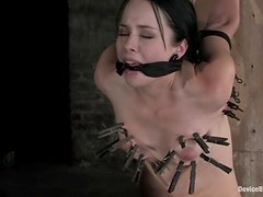 Sweet girls get their pussies stuffed in hot BDSM video