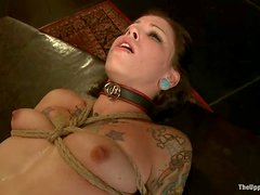 Gorgeous submissive sluts get hogtied till their boobs are blue