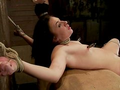 Kinky Ashli Orion licks mistress' tits and gets tortured
