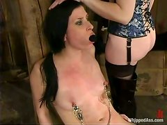 Dirty minded babes are in a BDSM hay