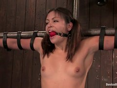 Pigtailed Thea Marie with Gag Ball in Mouth in Extreme Bondage Clip