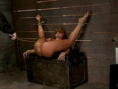 Curvaceous Ava Devine gets bonded and toyed in the ass